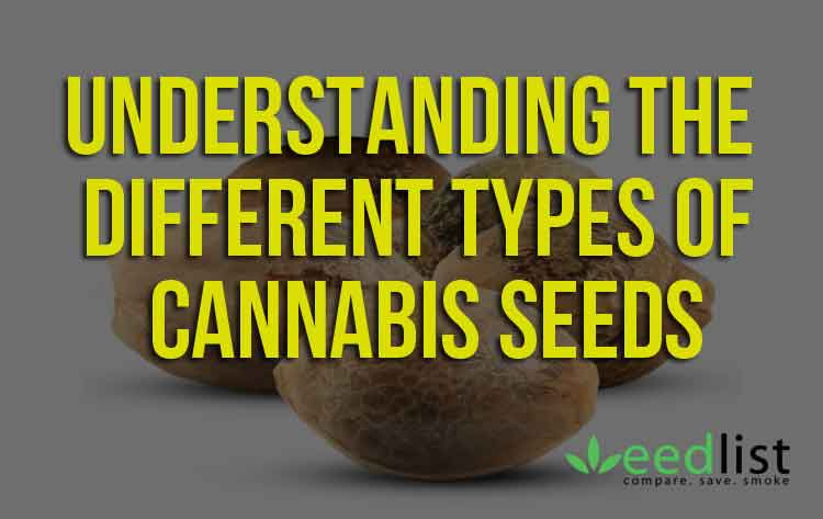 Understanding The Different Types Of Cannabis Seeds